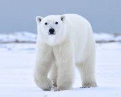 FrozenBear3