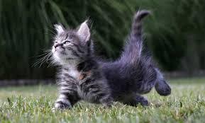KittenKatz